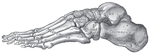 Voetboog - buitenzijde voet